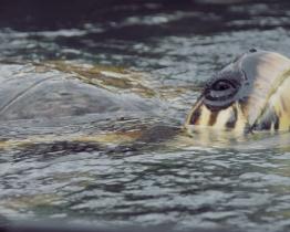 Toby & turtles