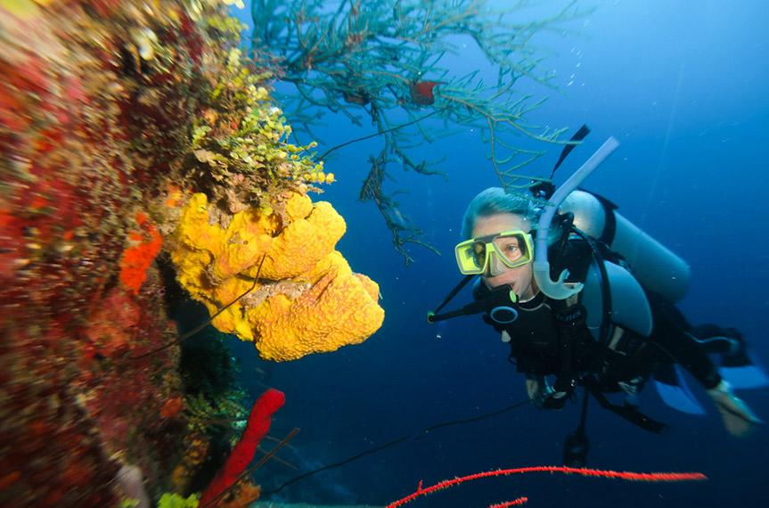 Vibrant marine ecosystem