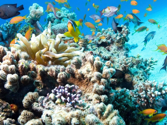 Saving our skin and marine life