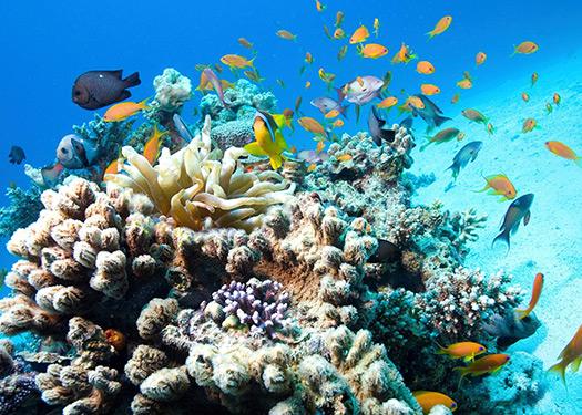 Saving our skin and marine life