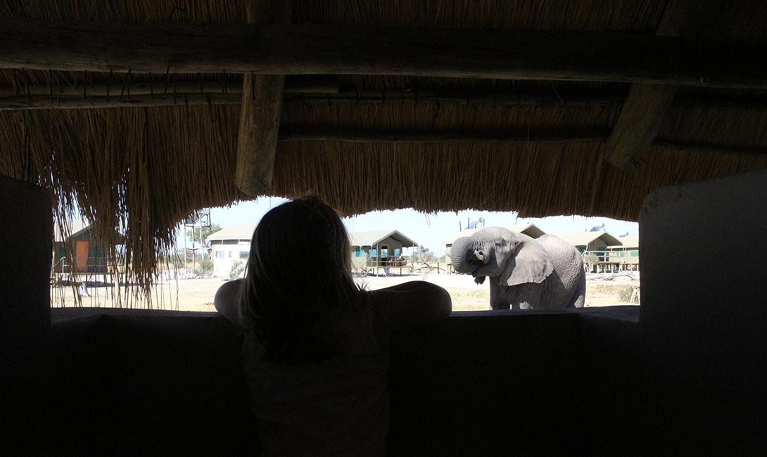 Elephant & Girl