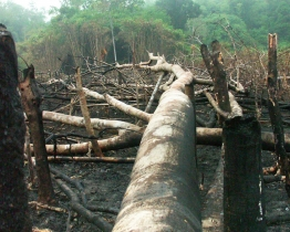 Deforestation illegal buring