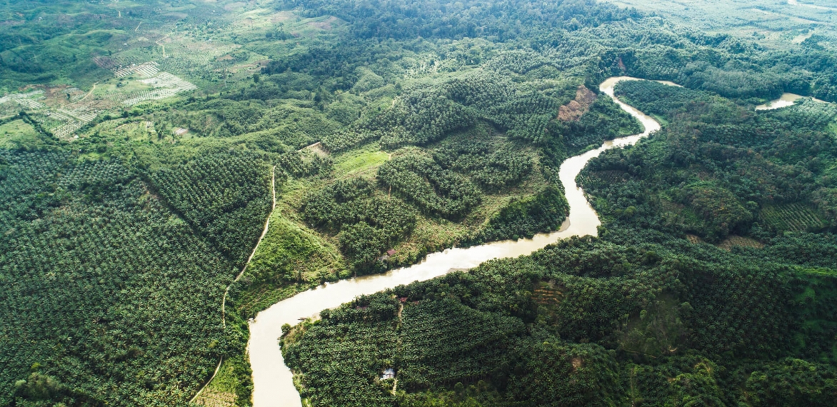 Can we have palm oil without deforestation?