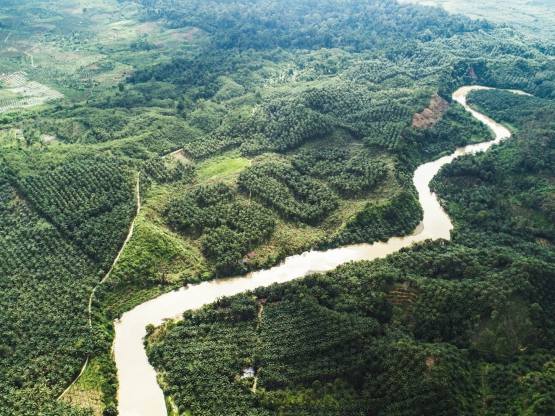 Palm oil and deforestation