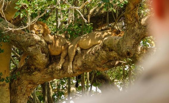 Top 5 safari experiences