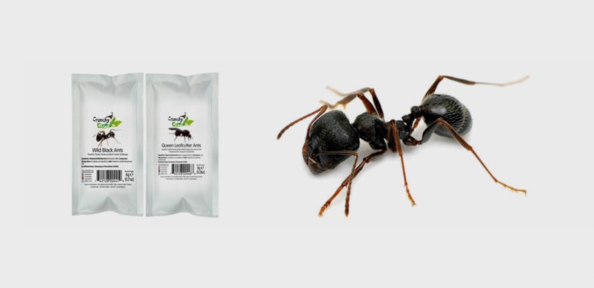 Black Ant Guacamole, Anyone?