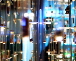 Provetas Science Museum Seeds
