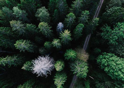 Sustainable to Regenerative Tourism