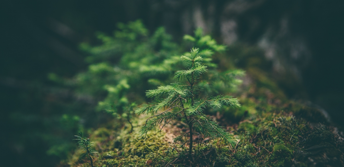 Valuing Our Natural Capital